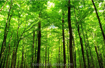 3d Effect Forest Design Low Moq Wall Murals Wallpaper Buy Forest