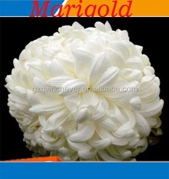 White marigold flower seeds four season planting buy white white marigold flower seeds four season planting mightylinksfo