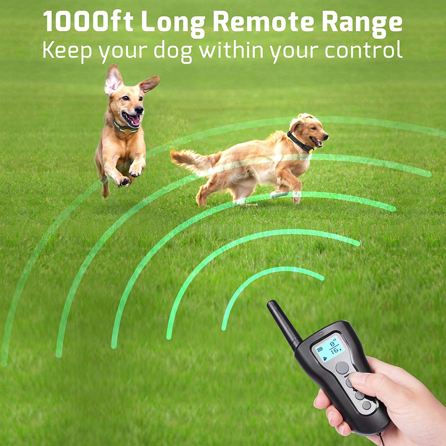 320 2 dogs remote range.jpg