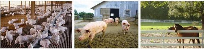 Animal Husbandry Feed Pelletizer Poultry Feed Mill For Sale In Pakistan Olx  - Buy Poultry Feed Mill For Sale In Pakistan Olx,Feed Pelletizer,Animal