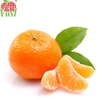 Exporting New Season Fresh Fruit With Low Price ,Sand Suger Orange