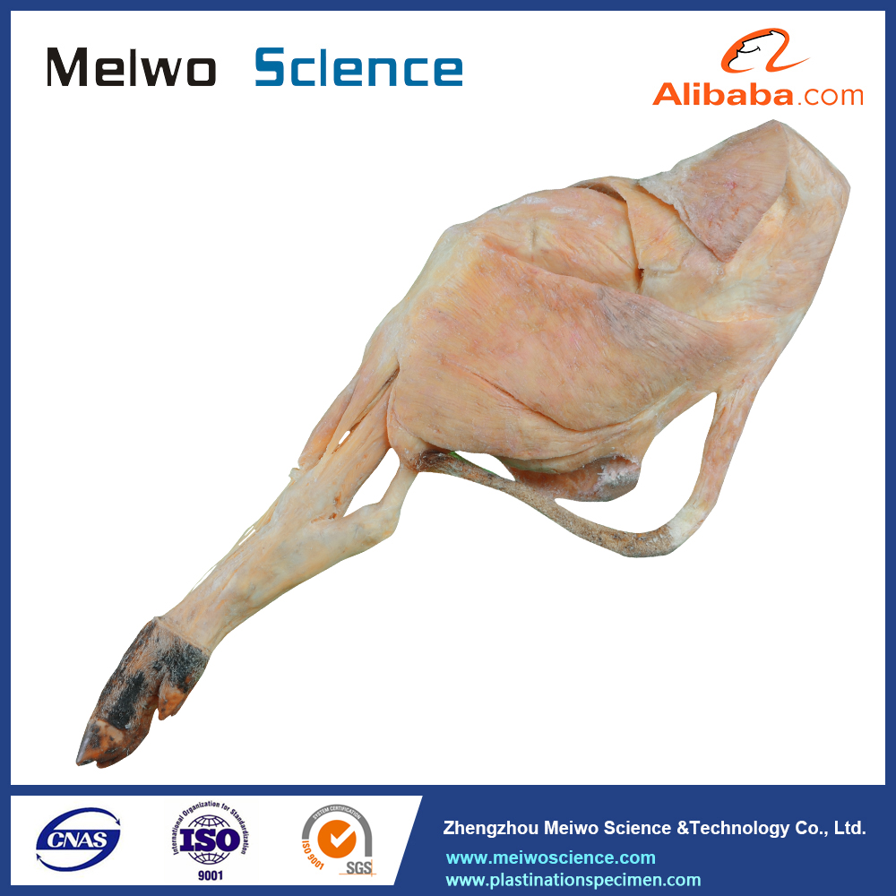 Pig Anatomy, Pig Anatomy Suppliers and Manufacturers at Alibaba.com