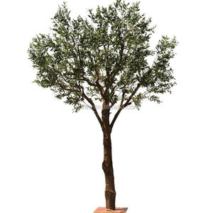 Olive Tree for decoration solid wood trunk