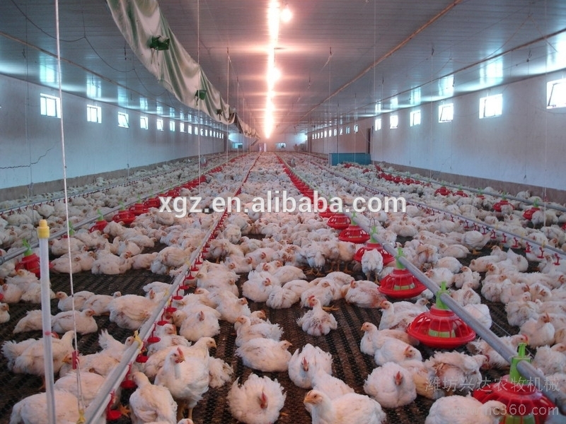 Economic Design And Low Cost Steel Structure Prefab Commercial Closed Automatic Poultry House