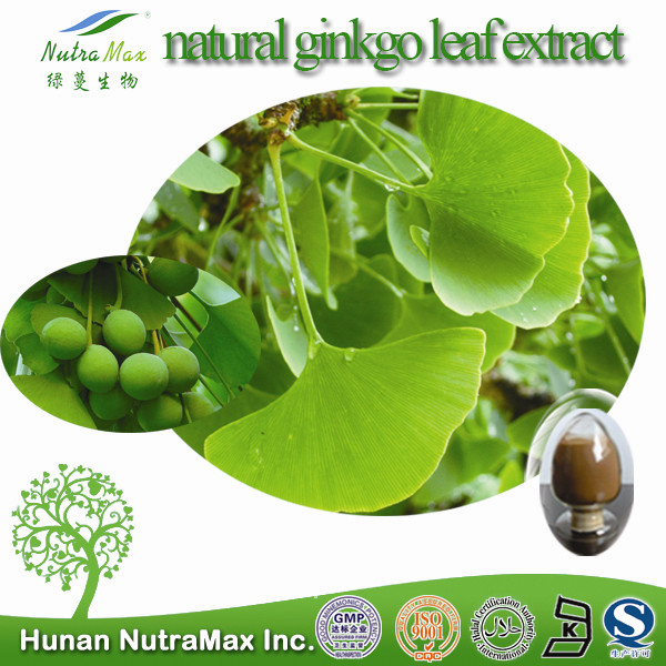 NutraMax Inc.- natural ginkgo leaf extract (24%Total ginkgo flavone glycosides / 6%Terpene Lactones )