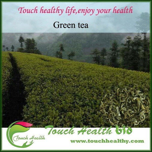 All grades Chinese organic green tea
