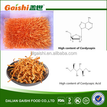 2014 new products high quality dried Cordyceps/health food