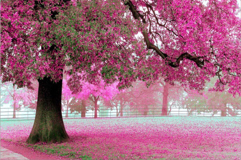 Wholesale 3d 012 Giant Sakura Tree Romantic Simple Scenery