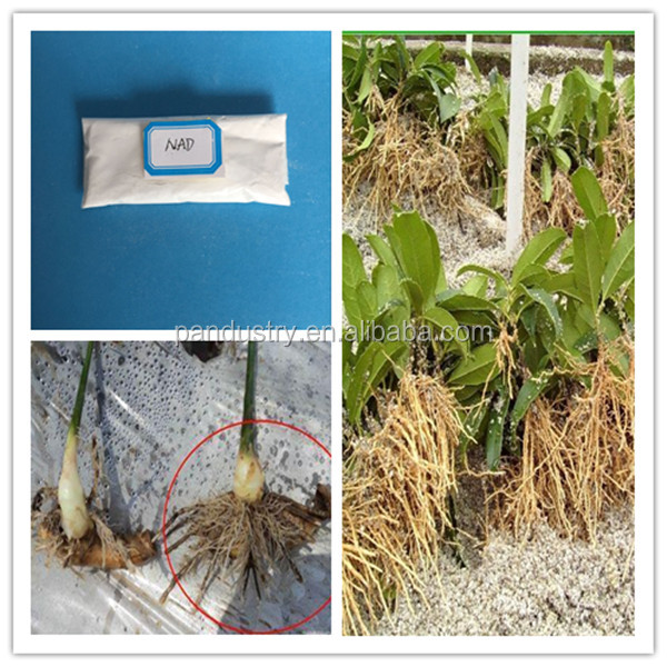 Agrochemical plant root growth promoter nad pgr