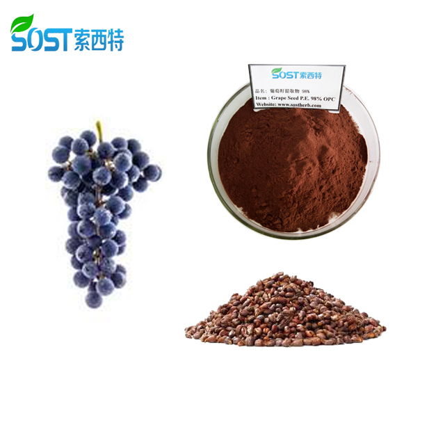 China Manufacturer Natural Grape Seed Extract Powder