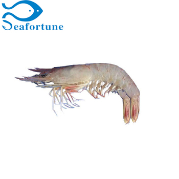 Raw Iqf Frozen Hoso Head On Scale On Pink Shrimp Trachypenaeus