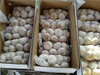2017 new fresh Garlic Cheap price for Russia Market