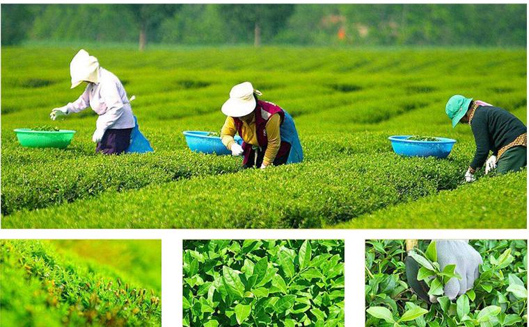 Detox Instant Tea,Instant Herbs tea for weight loss and body detox - 4uTea | 4uTea.com