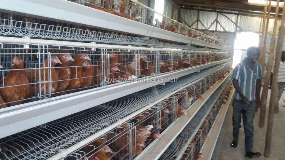 chicken cage-408
