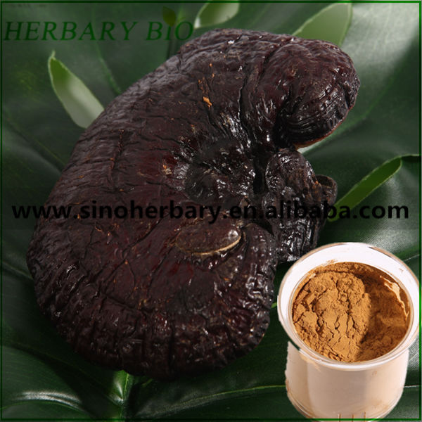 Wood log cultivated Ganoderma lucidum/Lingzhi mushroom triterpenes
