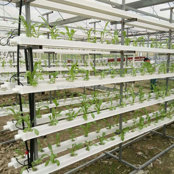 Aquaponics Growing Systems Grow Bed And Hole Pvc Pipes