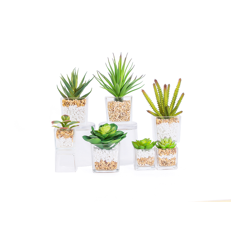 new design mini cute glass potted arrangement cactus succulent artificial plants indoor outdoor home garden decoration for sale