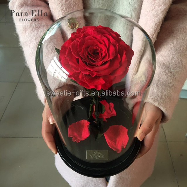 2017 popular big preserved long lasting rose in glass dome for Valentine day women gift