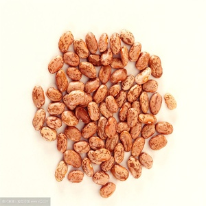 Round Light Speckled Kidney Beans LSKB for India | Pakistan | Yemen