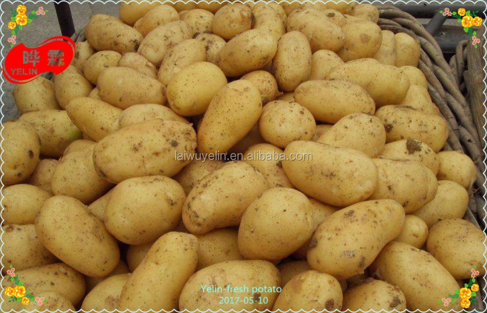 Fresh potato 2017 new crop