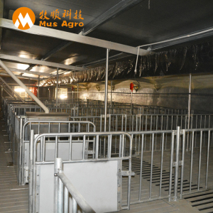 Finisher pigs design pig farm equipments for fatten pigs