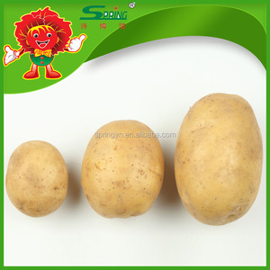 High Quality Fresh Potato for Dubai Buyer