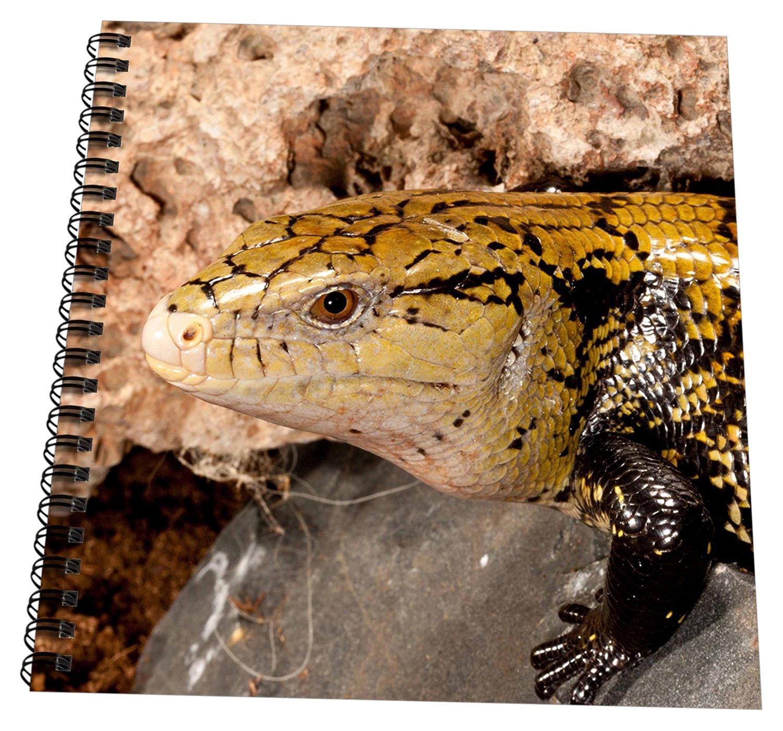 "3dRose db_140157_1 Irian Jaya Blue Tongue Skink, Lizard, Irian Jaya Na02 Dno0872 David Northcott Drawing Book, 8"" x 8"""
