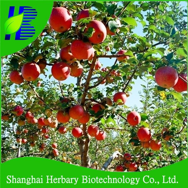 2018 Hot sale fruit seeds apple seeds for cultivating