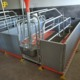 High Quality Pig Farm Farrowing Crates For Sale