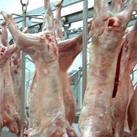 Frozen Lamb/Goat/Mutton Meat whole carcass in 10/6/4 way cuts