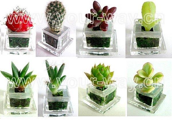 Good Pet Tree (mini Plant,Pet Plant,Finger Rose,Key Chain )   Buy Pet Tree  Product On Alibaba.com