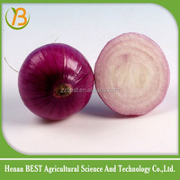 2016 new crop fresh and bulk red onion sale from China