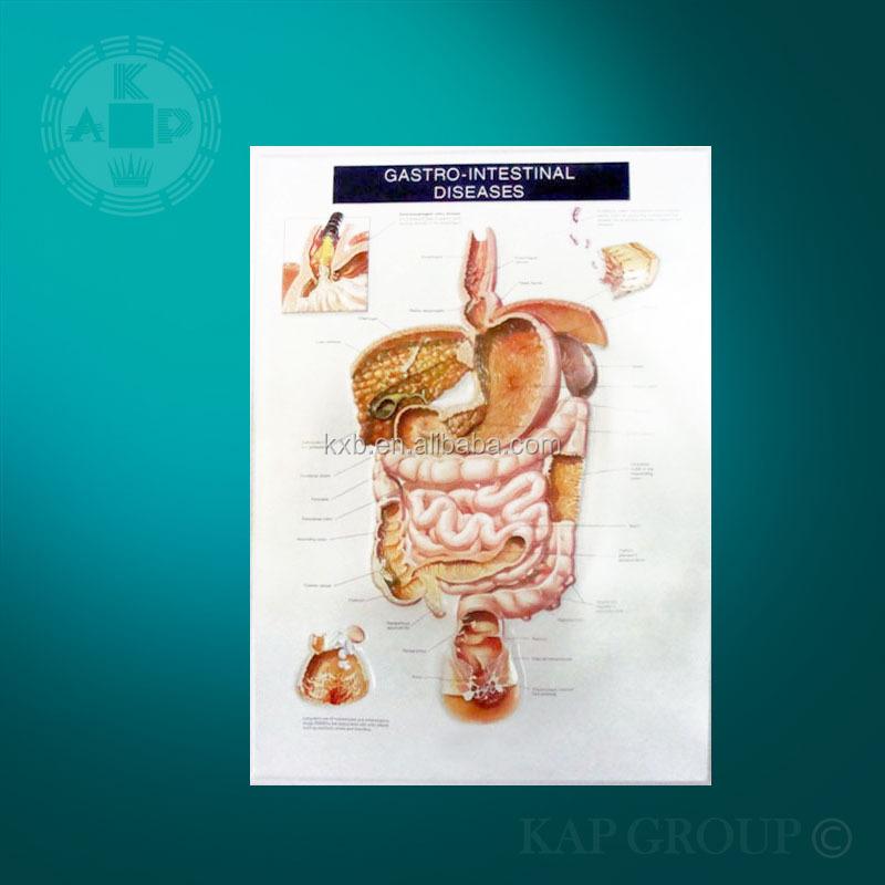 Anatomía Cuerpo Humano Órgano Perfil Gráfico Detalles De Estómago ...