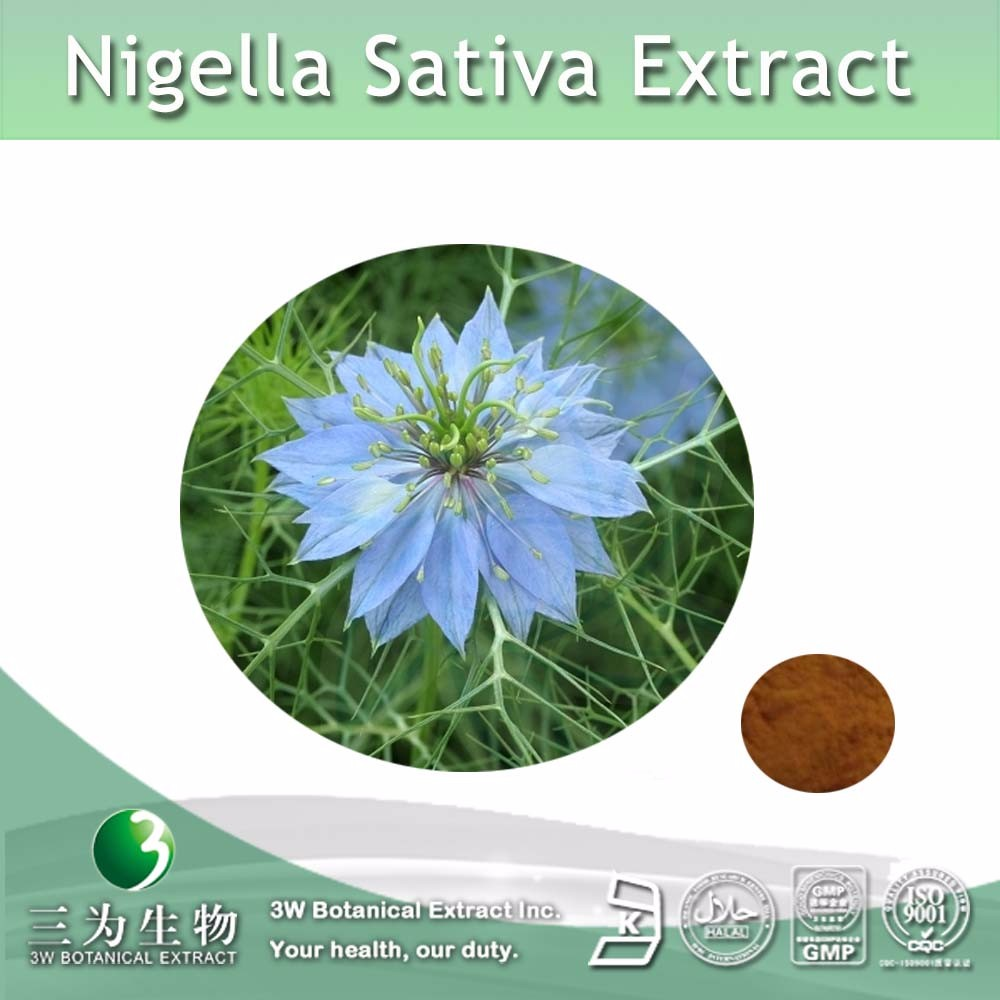 Hot selling Nigella Sativa Seeds Extract Powder 5:1 10:1 20:1