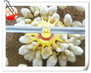 Auto poultry feeding equipment for broiler chicks rate