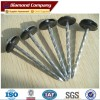 galvanized umbrella roofing nail with ISO 9001 certificate
