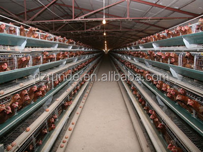Total solution with all accessories commercial chicken house desgn