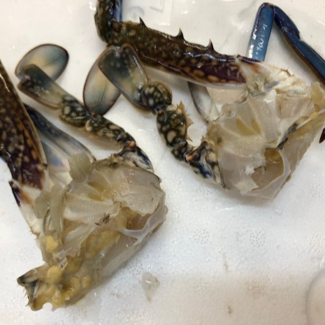 Special Offer Half Cut WR Blue Crab Frozen Seafood Exporter
