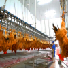 /product-detail/1000-10000bph-chicken-slaughtering-equipment-1951859082.html