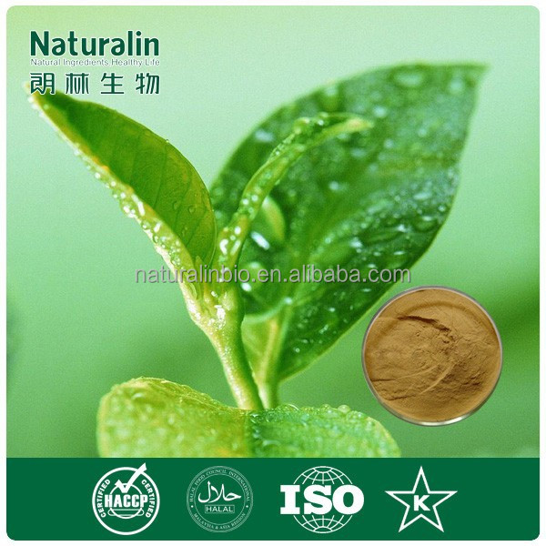 Natural and Healthy Green Tea Powder Extract / Catechin