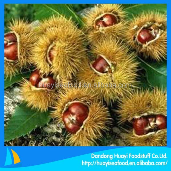 top urgent want to buy chestnut with competitive price