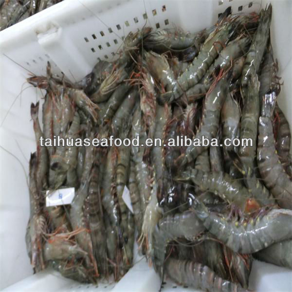 raw fresh headless white tiger shrimp