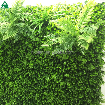 Landscaping Artificial Living Wall, Outdoor Green Plant Wall , Artificial  Ornamental Plants For Walls