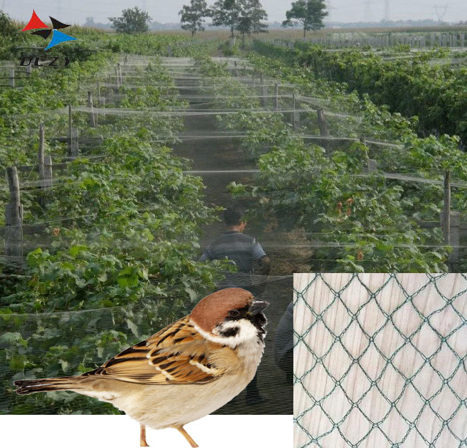 2018 Newest vegetable <strong>net</strong> Custom anti bird <strong>net</strong> for orchards