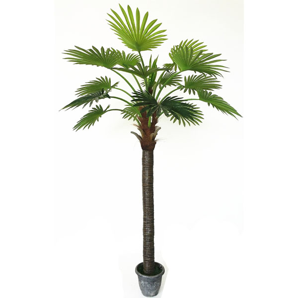 2.85m Hot Sale Factory Direct Large Indoor Palm Trees - Buy Large ...
