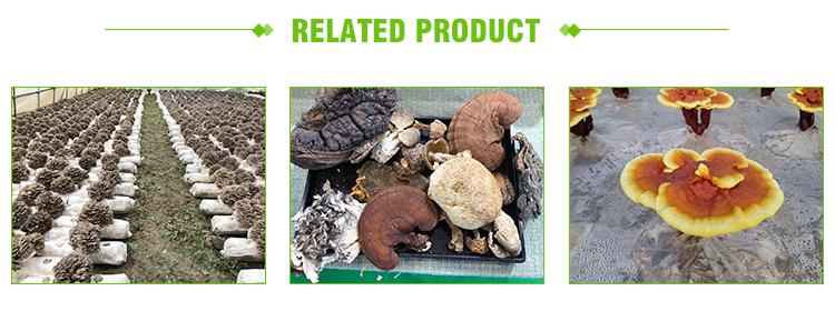 Top Grade Reishi Mushroom Extract reishi Beta Glucan D 1,3/1,6