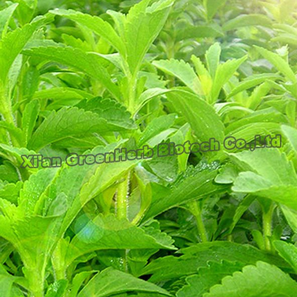 Plant Extract Stevioside Stevia
