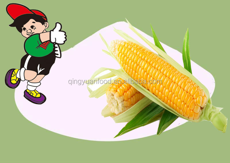 China manufacturer native corn starch/maize starch