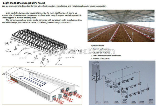 automated broiler house for chicken farm
