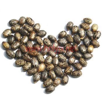 Quinoa Seed Coriander Seed Castor Seed Oil Plant Sunflower Oil ...